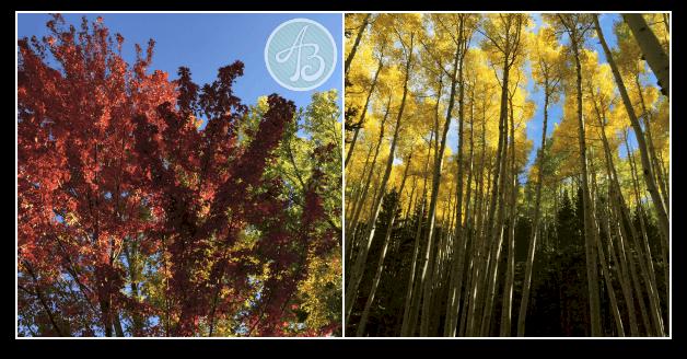 Fall_leaves_flagstaff